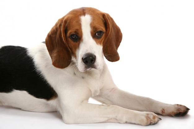 Lindo cão funy Foto gratuita