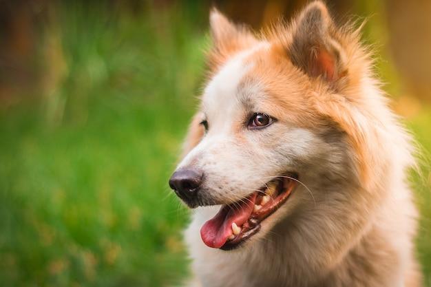 Lindo cão no fundo da natureza. Foto Premium