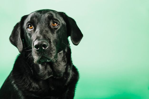 Lindo cão preto Foto gratuita