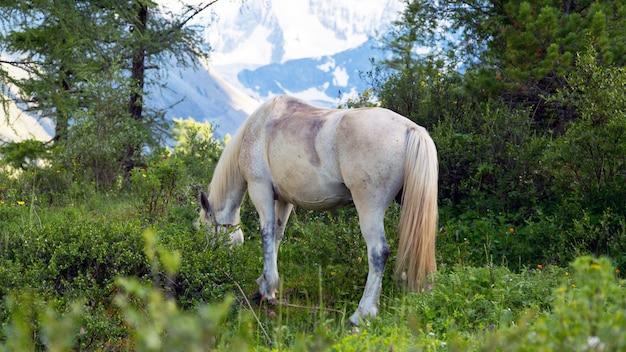 Lindo cavalo branco na floresta. Foto Premium