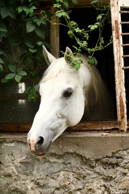 Lindo cavalo branco Foto gratuita