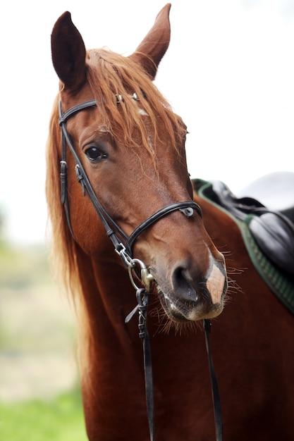 Lindo cavalo castanho Foto gratuita
