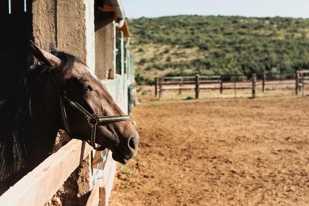 Lindo cavalo em pé com a cabeça fora do estábulo Foto gratuita