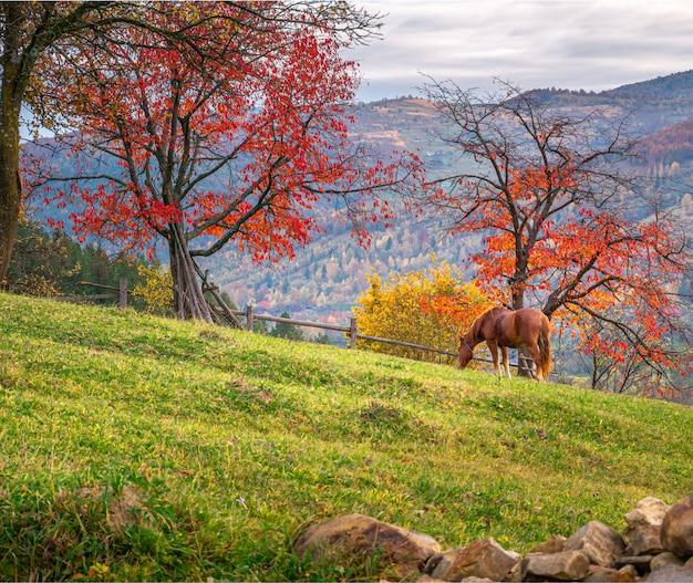 Lindo cavalo marrom na paisagem de outono com árvores vermelhas Foto Premium