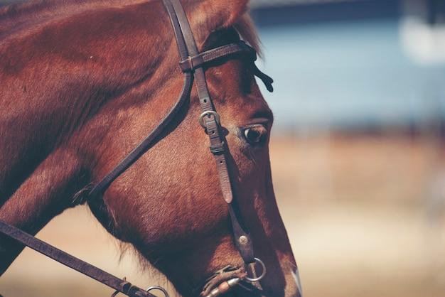 Lindo cavalo vermelho com retrato de juba longa Foto Premium