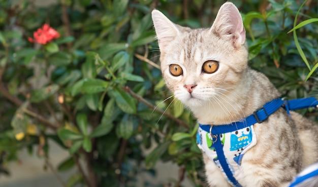 Lindo gatinho bonitinho com lindos olhos amarelos na areia branca no jardim ao ar livre Foto Premium