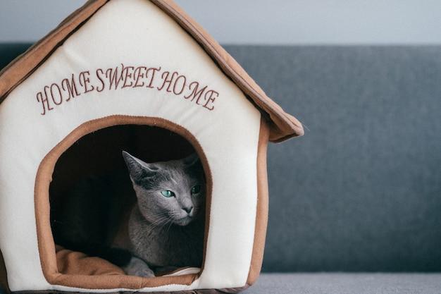 Lindo gatinho dormindo na casa de gato. Foto Premium