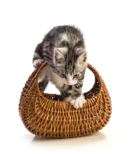 Lindo gatinho isolado com cesta Foto Premium