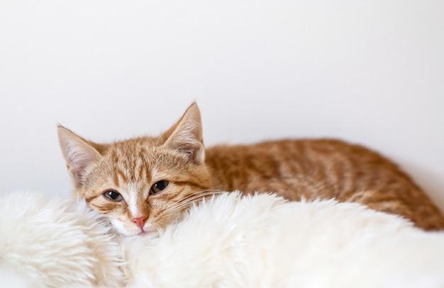 Lindo gatinho ruivo deitado em um cobertor branco macio em casa Foto Premium