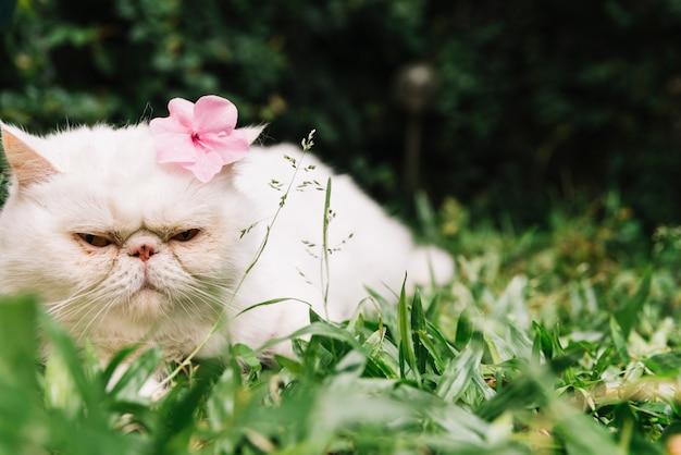 Lindo gato branco na natureza Foto gratuita