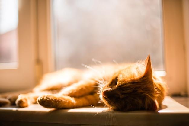 Lindo gato dourado de um olho só deitado cansado no parapeito da janela Foto gratuita