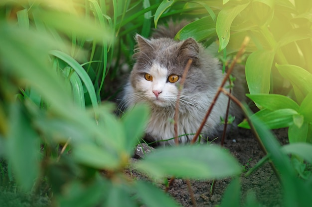 Lindo gato sentado em um campo de flores Foto Premium