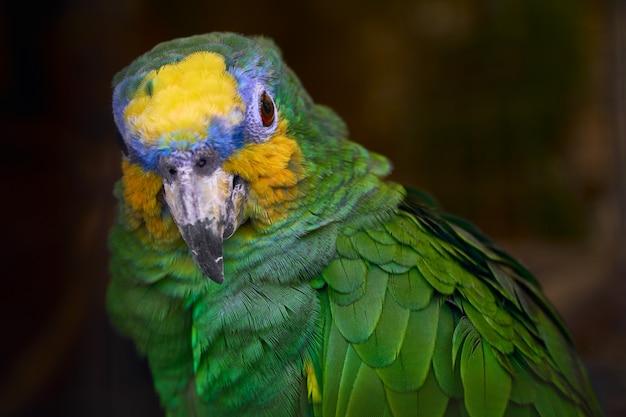 Lindo papagaio verde close-up Foto Premium