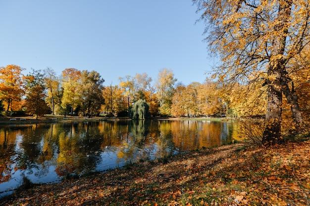 Lindo parque de outono com lago e sol Foto Premium
