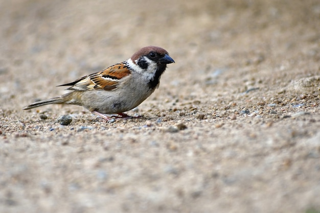 Lindo passarinho selvagem na natureza Foto gratuita