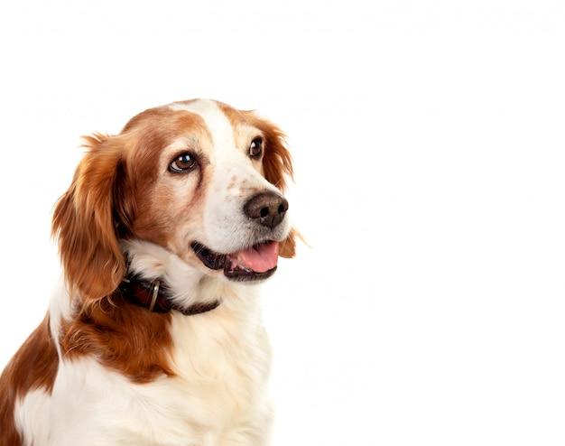 Lindos retratos de um cachorro Foto Premium