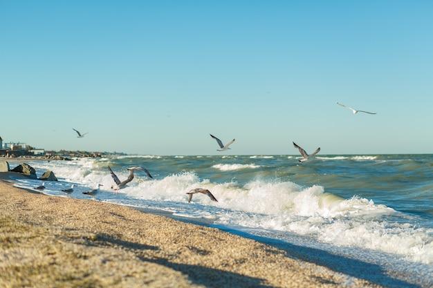 Linha de areia da praia do mar tempestuoso Foto Premium