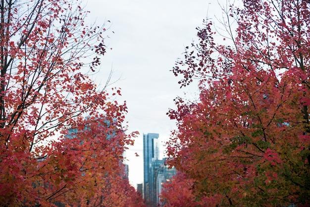 Linha de árvores de bordo na cidade Foto gratuita
