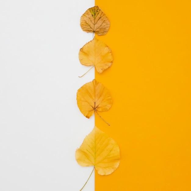 Linha de folhas de outono vista superior Foto gratuita