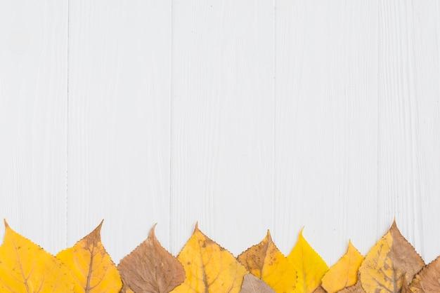 Linha de folhas de outono Foto gratuita