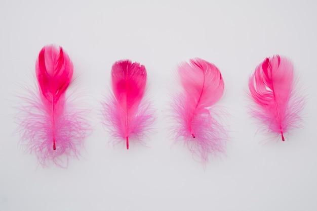 Linha de penas cor de rosa suaves Foto gratuita