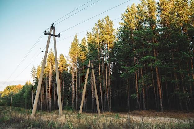Linhas elétricas no glade ao longo das árvores das coníferas na luz solar. Foto Premium
