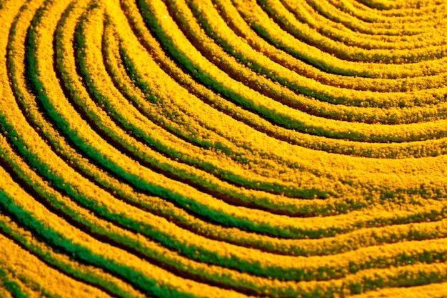 Linhas em forma circular da areia amarela Foto gratuita