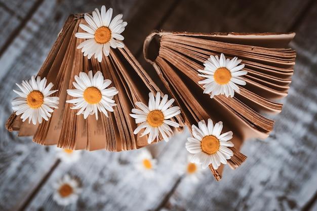 Livros antigos com flores de margaridas brancas. Foto gratuita