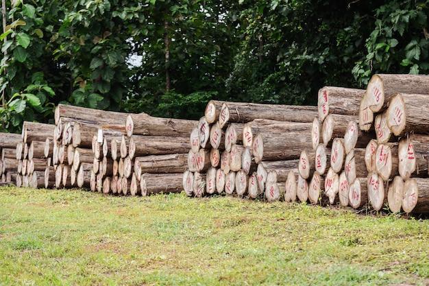Logs de teca de ouro cortados em pedaços para preparar a fábrica para fazer móveis. Foto Premium