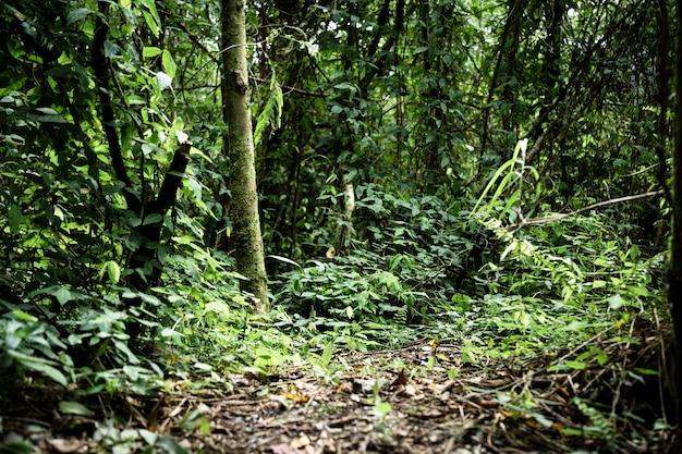 Long shot selva tropical com árvores e vegetação Foto gratuita