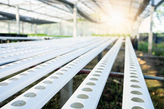 Lotes crescentes vegetais orgânicos. industrial Foto Premium
