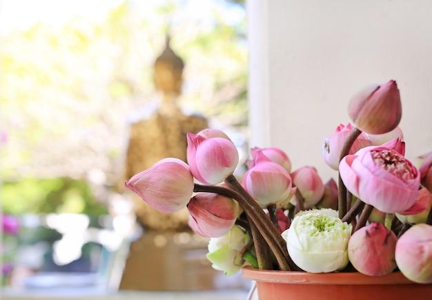 Lotus para cerimônia religiosa budista Foto Premium