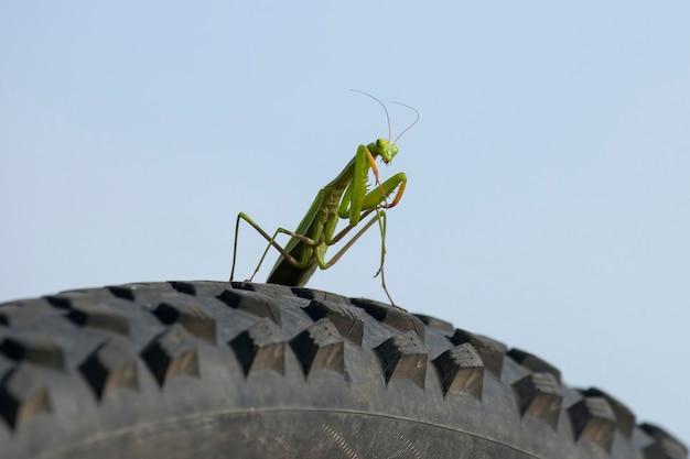 Louva-a-deus verde em close-up de roda de bicicleta Foto Premium