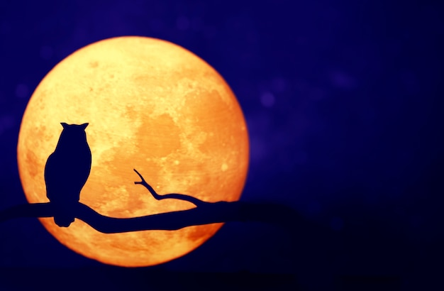 Lua cheia no céu noturno Foto gratuita
