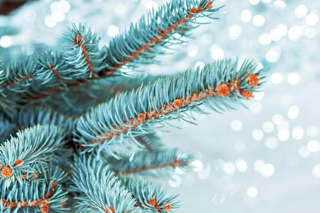 Luz da árvore de natal Foto Premium