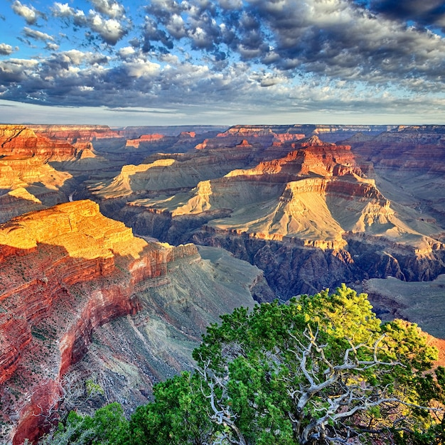 Luz da manhã no grand canyon, arizona, eua Foto Premium