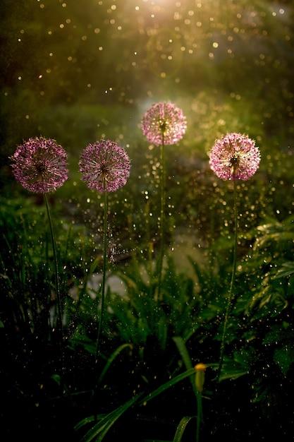 Luz da noite brilha sobre grama verde e flores do campo Foto gratuita