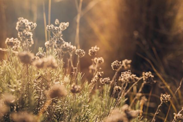 Luz do sol em flores mortas Foto gratuita