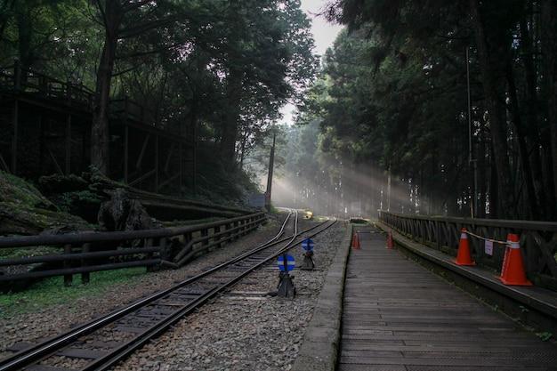 Luz do sol na floresta na estrada de ferro na linha alishan, taiwan Foto Premium