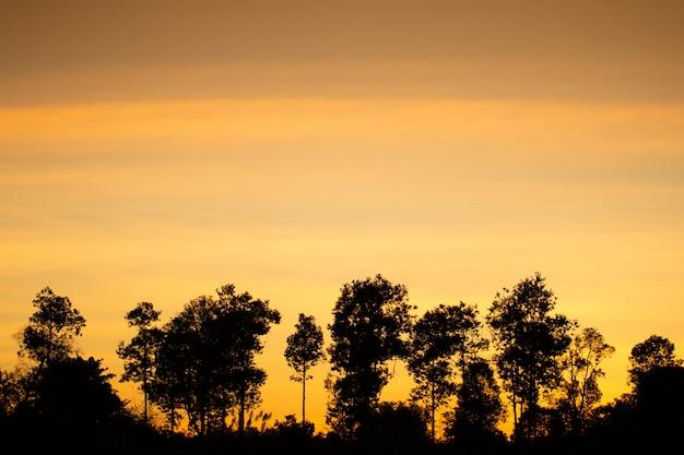 Luz dourada do efeito do nascer do sol e fundo de campo Foto Premium