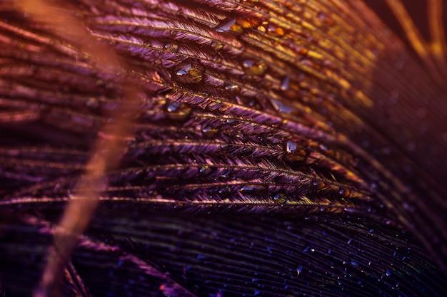 Luz na pena de pavão com gota de água Foto gratuita