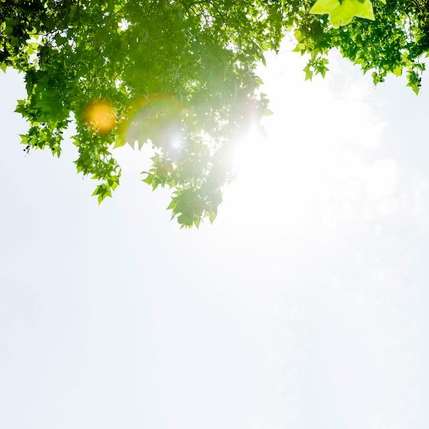 Luz solar, ligado, maple verde, árvore, contra, céu Foto gratuita
