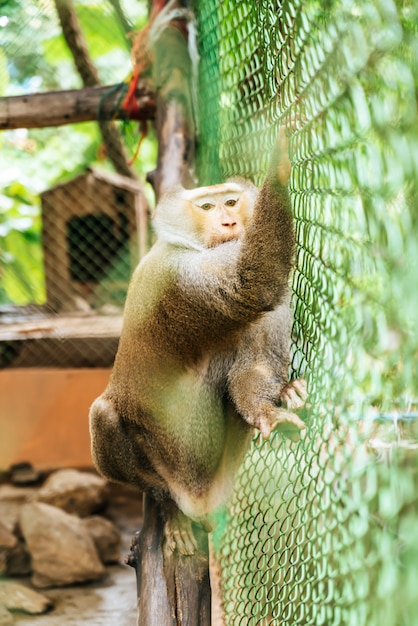 Macaco bonito sentado na gaiola Foto Premium
