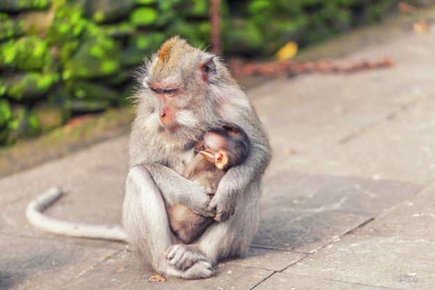 Macaco com bebê no parque Foto Premium