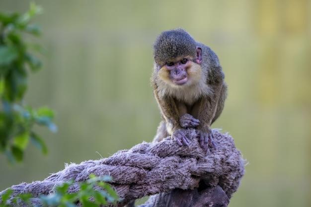 Macaco pequeno no zoológico de barcelona, na espanha Foto Premium