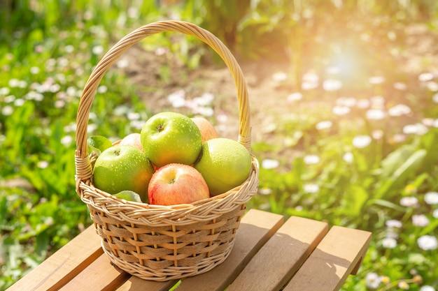 Maçãs verdes e vermelhas na cesta de vime na mesa de madeira grama verde na jardim hora da colheita sun flare Foto Premium
