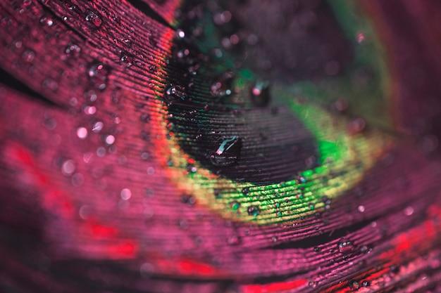 Macro colorido vibrante close-up de penas de pavão com gotas de água Foto gratuita