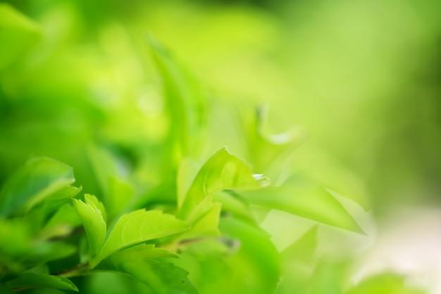 Macro de folhas de árvore para o fundo da natureza Foto Premium