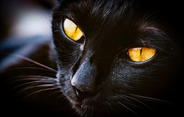 Macro de gato pet animal mammale Foto Premium