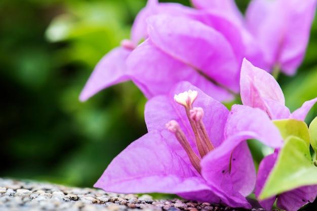 Macro de natureza real bougainville papel flor botânica Foto gratuita